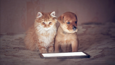 Cat and Puppy with Tablet