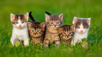 5 Kittens in Grass