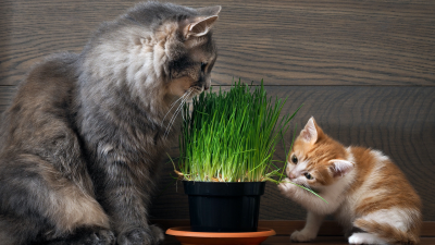 Cat and Kitten with Grass